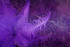 Konstnärlig ormbunkemodell Tropisk naturbanermall Moderiktigt v Royaltyfri Foto