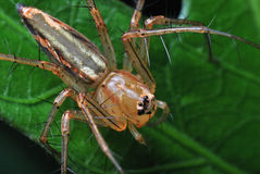 konstnärlig spindel Arkivfoto