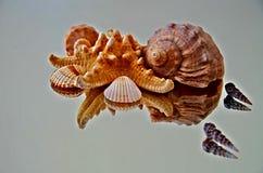 Konstnärligt hav Shell Reflection arkivfoto