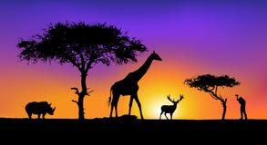 konstnärligt wild för djur Arkivbild