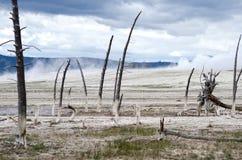KonstnärPaintpots Yellowstone nationalpark, Wyoming Arkivfoto