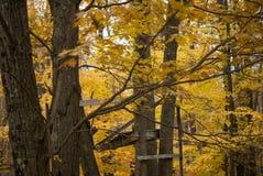 Konstruierter Baumstand im Baum durch Hinckley Mangan im Fall, gelbe Blätter, Eiche, Ahorn, Birke stockfotos
