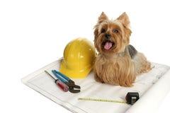 konstruktionshund Arkivbild