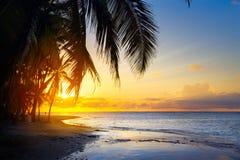 Konstsoluppgång över den tropiska stranden Royaltyfri Fotografi