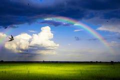 Konstsommarpanorama av naturen efter regnet Arkivfoton