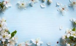 Konstvårbakgrund; ny blomma på blå bakgrund fotografering för bildbyråer