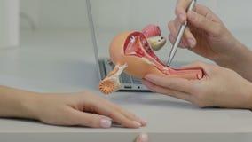 Konsulterande patient för gynekologdoktor som använder livmoderanatomimodellen arkivfilmer