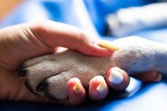 Kontakt między psią łapą i ludzką ręką fotografia royalty free