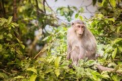 Kontakt wzrokowy małpa fotografia royalty free