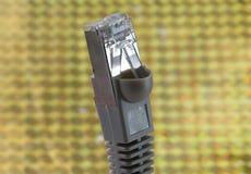 Kontaktdon för nätverk RJ45 som förbinder datorer till internet Royaltyfria Foton