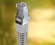 Kontaktdon RJ45 som förbinder datorer till internet och gulden Royaltyfria Bilder
