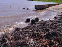 Kontaminowanie seashore Obrazy Royalty Free