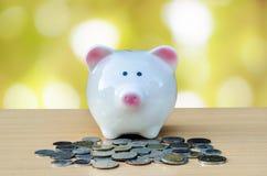 kontant gullig piggy bunt för grupp Begrepp av besparingar och pengar Arkivfoto