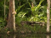 Kontemplaci siedzenie na lilypond z paprociami i Paperbark drzewami, światła słonecznego wybrzeże, Queensland, Australia Zdjęcie Royalty Free