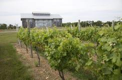 Kontokosta  Winery vineyard Long Island USA room Long Island USA Stock Photos