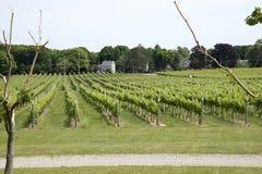 Kontokosta  Winery vineyard Long Island USA room Long Island USA Royalty Free Stock Photos