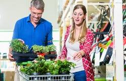 Kontorist som deltar i kunden i trädgårds- mitt royaltyfri fotografi