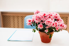 Kontorsarbetsplats med den rosa bougainvilleablomman i krukan på den vita skrivbordtabellen Selektivt fokusera Royaltyfri Foto