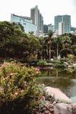 Kontorsbyggnader som döljas bak grönskan av Hong Kong, parkerar arkivfoton
