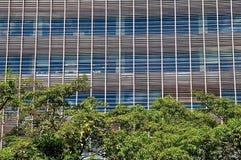 Kontorsfönster och träd royaltyfri foto