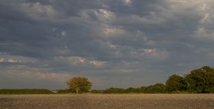 Kontrast av det himmelgrus och trädet arkivbilder