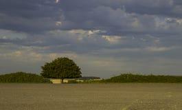 Kontrast av det himmelgrus och trädet royaltyfria foton