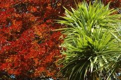 kontrast wiosna Obraz Royalty Free