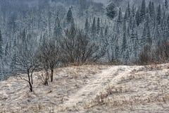Kontrast zimy krajobraz Zdjęcie Royalty Free