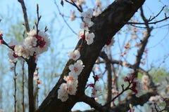 Kontrasta skład starzy i nowi kwiaty zdjęcia stock