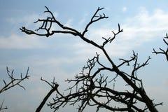 KONTRASTERA BRÄND SVART FÖRGRENA SIG MOT GRÄNSEN - blå HIMMEL Fotografering för Bildbyråer