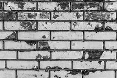Kontrastera det svartvita fotoet av den red ut gamla tegelstenväggen arkivbild