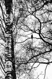 Kontrastera landskap med en fågel arkivfoto