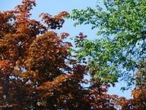 Kontrastera träd i parkera på solig dag Arkivbilder