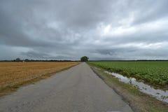 Kontrastować pola przez drogę Zdjęcia Stock