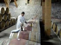 Kontrola jakości wino przy wytwórnią win Santa Rita Zdjęcie Royalty Free
