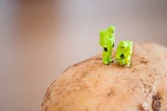 kontroll av den skyddande forskaredräkten för potatis fotografering för bildbyråer
