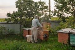 Kontrollera bibikupan för närvaron av honung arkivfoto
