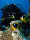 kontrollera fisken ut Royaltyfria Foton