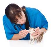 Kontrollera ögon av katten i veterinär- klinik isolerat Arkivbild