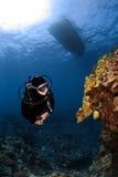 kontrollera koralldykarebildande ut några som är ovanliga Royaltyfria Foton