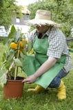 kontrollera trädgårdsmästaren Arkivbilder