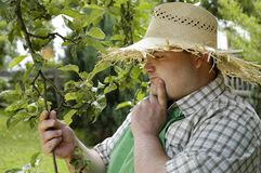 kontrollera trädgårdsmästaren arkivbild