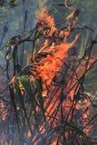 Kontrollerade brännskadafoto Fotografering för Bildbyråer