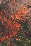 Kontrollerade brännskadafoto Royaltyfria Bilder