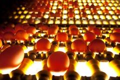 kontrolna jajek produkci ilość Obrazy Stock