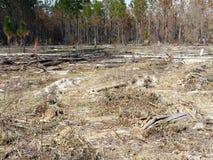 Kontrolowany oparzenie teren w lesie zdjęcie royalty free
