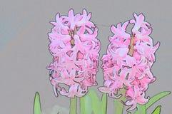 Konturów kwiaty hiacyntowi Fotografia Royalty Free