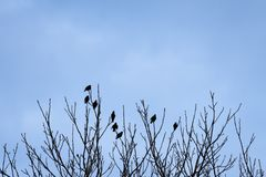 Kontur av åtta överkanten för ¾ n för fåglar Ð av trädfilialer i winten Arkivbilder