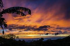 Kontur av bananträdet med frukt som är främst av en rödaktig fördunklad solnedgånghimmel ovanför Stillahavs- vatten arkivbild