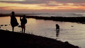 Kontur av barn och hunden som spelar på stranden på solnedgången Pojke och flicka som har gyckel med deras husdjur stock video